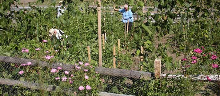 SHIM's Community Gardens