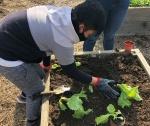 Boy planting in garden