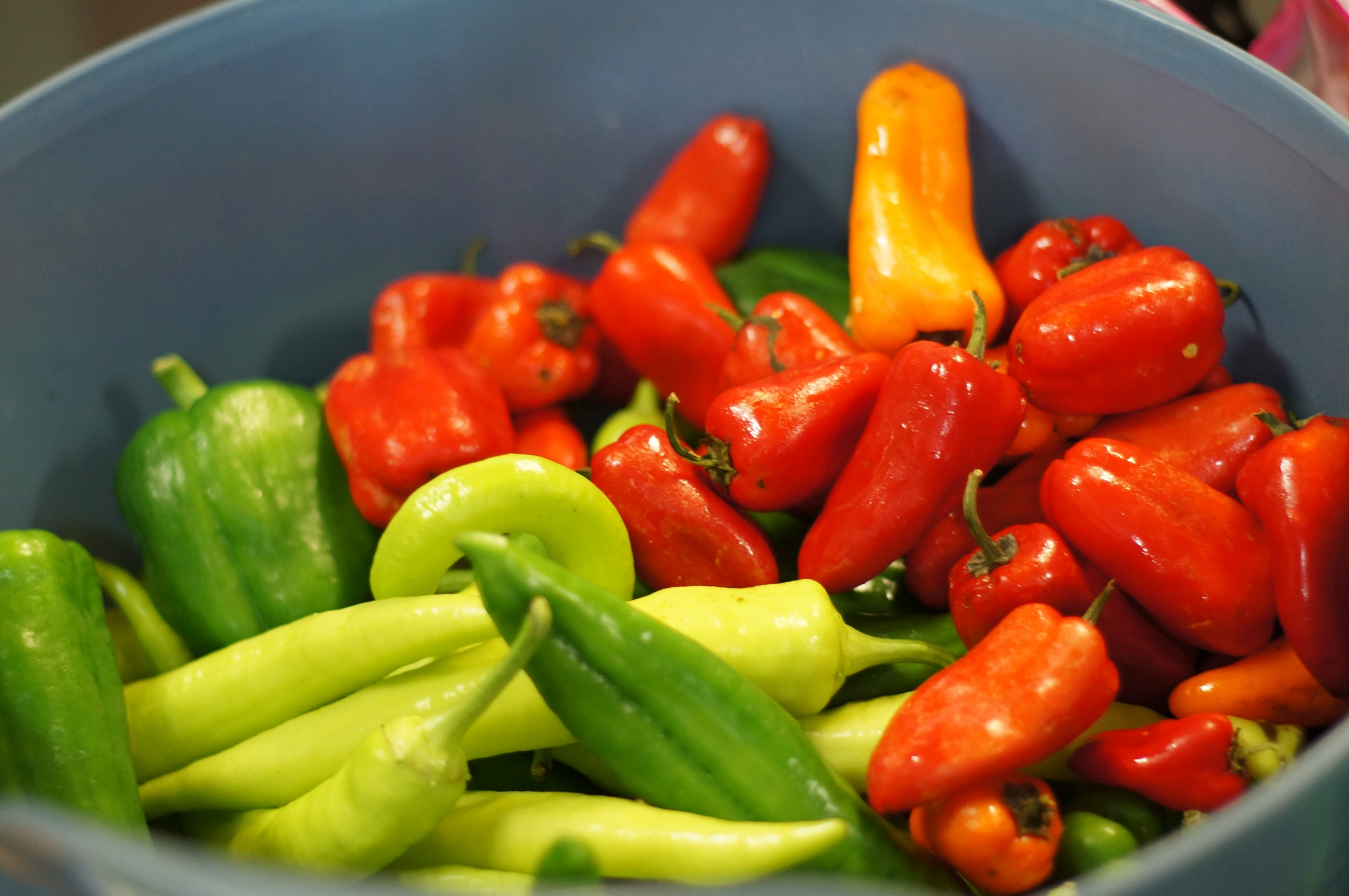 Harvested peppers
